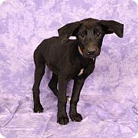 Adopt A Pet :: Marilyn BC - St. Louis, MO