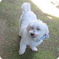 Adopt A Pet :: Seth - House Springs, MO