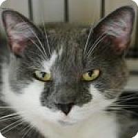Adopt A Pet :: Misty - Medford, MA