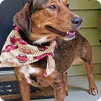 Adopt A Pet :: Slinky - Baton Rouge, LA