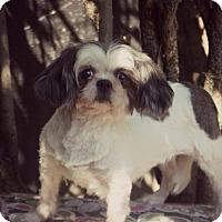 Adopt A Pet :: Liberty - Thorp, WI