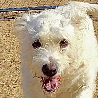 Terrier (Unknown Type, Medium) Mix Dog for adoption in Lancaster, California - Cosita