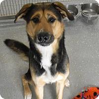 Adopt A Pet :: DALE - Sandusky, OH