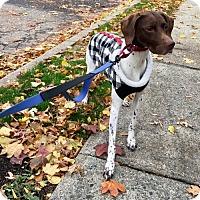 Adopt A Pet :: Holly - Oak Ridge, NJ