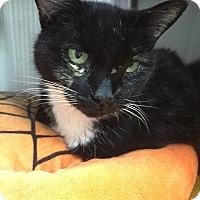 Adopt A Pet :: Meeka - Chico, CA