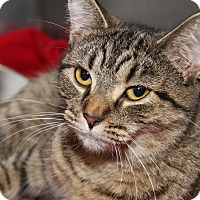 Adopt A Pet :: Angel - Marietta, OH