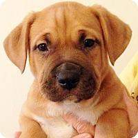 Adopt A Pet :: Sebastian - San Diego, CA