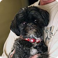 Adopt A Pet :: Coal - Palmdale, CA