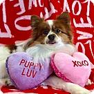 Adopt A Pet :: Sammy2
