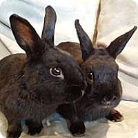 Adopt A Pet :: Olive and Delgado - Conshohocken, PA
