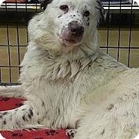 Adopt A Pet :: Tara - Gainesville, FL