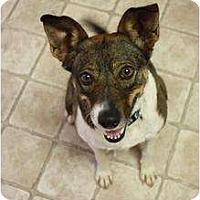 Adopt A Pet :: Kinsler - Arlington, TX