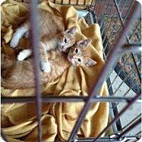 Adopt A Pet :: Baby Bears - Mobile, AL