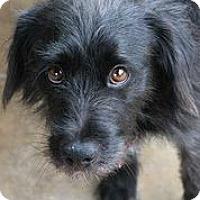 Adopt A Pet :: Hootie - Austin, TX