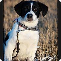 Adopt A Pet :: Blitzen - Wilmington, DE
