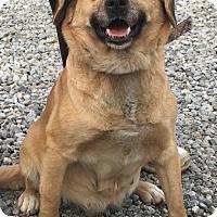 Adopt A Pet :: HAILEY - Cadiz, OH