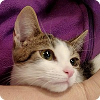 Adopt A Pet :: Cloud - Trenton, NJ