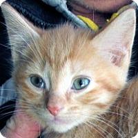 Adopt A Pet :: Harriet - Germantown, MD