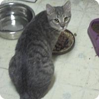 Adopt A Pet :: Minerva - Woodland, CA