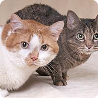 Adopt A Pet :: Pumpkin & Little Bit - Chicago, IL