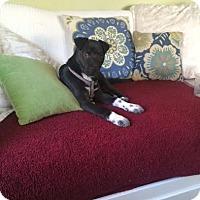 Adopt A Pet :: Heidi - Houston, TX