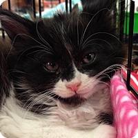 Adopt A Pet :: PICKLES - Lakewood, CA