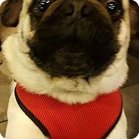Adopt A Pet :: JAX - Rancho Cucamonga, CA