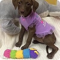 Adopt A Pet :: CHESTA - Fort Pierce, FL