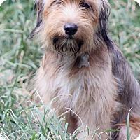 Adopt A Pet :: Ferndale - Woonsocket, RI