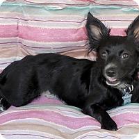 Adopt A Pet :: Windy - Elyria, OH