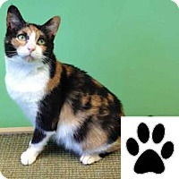 Adopt A Pet :: Fern - Suwanee, GA
