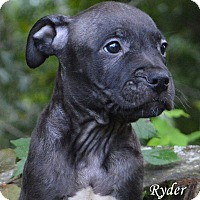 Adopt A Pet :: Ryder - Lake Pansoffkee, FL