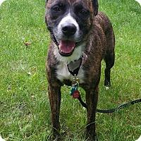 Adopt A Pet :: Bailey - East Randolph, VT