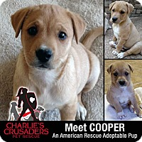 Adopt A Pet :: Cooper - Spring City, PA