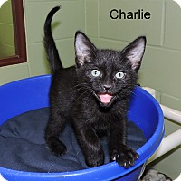 Adopt A Pet :: Charlie - Slidell, LA