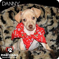 Adopt A Pet :: Danny - Council Bluffs, IA