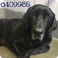 Adopt A Pet :: A409985 - San Antonio, TX