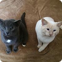 Adopt A Pet :: Pumpkin and Autumn - Buffalo/Rochester, NY