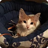 Adopt A Pet :: Danny - New York, NY
