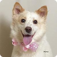Adopt A Pet :: Nora - Kerrville, TX