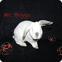 Adopt A Pet :: Mr. Biggs - Elizabethtown, KY