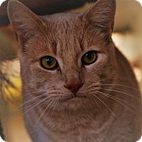 Adopt A Pet :: Denver - Toms River, NJ