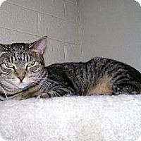 Adopt A Pet :: Quizzy - Scottsdale, AZ