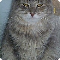 Adopt A Pet :: Roxi - Hamburg, NY