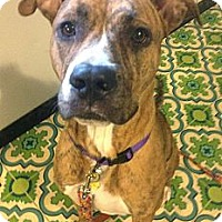 Adopt A Pet :: Rae - Cleveland, OH