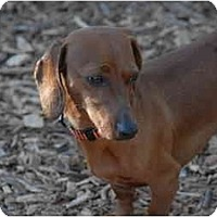 Adopt A Pet :: Eloise - Ft. Myers, FL