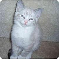 Adopt A Pet :: Clifton - Davis, CA