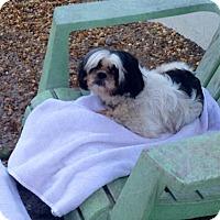 Adopt A Pet :: SWEET PEA - Boca Raton, FL