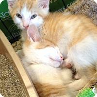 Adopt A Pet :: Lumos - Horsham, PA