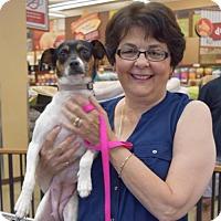 Adopt A Pet :: Sophi - Sacramento, CA